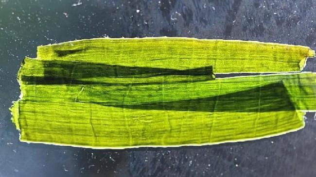 Sanatçı Nergiz Yeşil ile Bunu sen de yaparsın! atölyesi