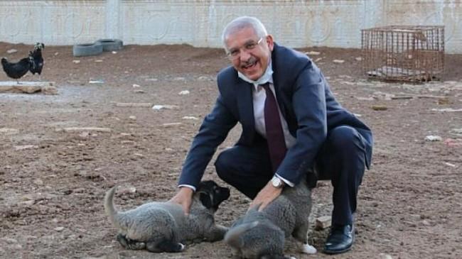 "İYİ Parti'li Yokuş: Hayvanlar ""mal"" değil, ""can"""