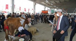 Gölbaşı Belediyesi; AGROTEC Tarım Fuarı'nda Süt Sağma Yarışması..